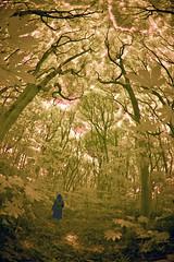 Through An Enchanted Forest (aeschylus18917) Tags: japan forest landscape ir woods nikon scenery d70 nikond70 hiking surreal infrared  hiker pxt  105mm chibaken 105mmf28gfisheye chibaprefecture  nikkor105mmf28gfisheye  chshi danielruyle  aeschylus18917 danruyle druyle   chshishi