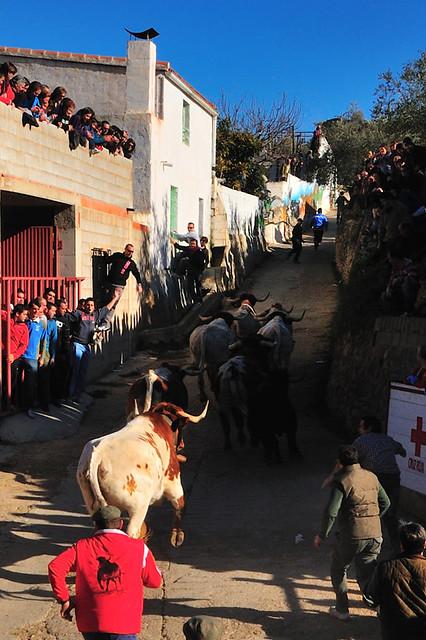 Fotos de las Fiestas de San Blas 2011