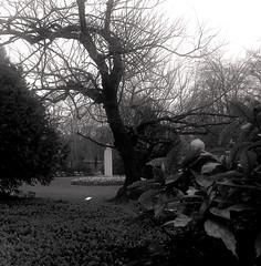 Dans les jardins du Luxembourg. (Martha MGR) Tags: bw paris nature blackwhite natureza paisagem vernissage mmgr duetone jardinduluxemburg graytone marthamgr reservaespecial 4msphotographicdream 2msroyalstation marthamariagrabnerraymundo marthamgraymundo