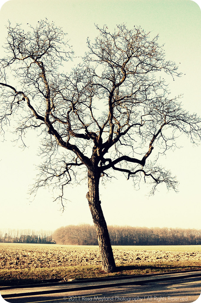 Tree sunny 2.1 bis