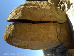 tortuga /  tortoise (Luis Diaz Devesa) Tags: espaa naturaleza verde beach nature animal animals rock spain europa europe turtle tortoise playa galicia galiza animales tortuga tartaruga pontevedra tortue roca riasbaixas luisdiazdevesa