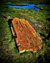 The Fall (Steve Richards (Badger)) Tags: water pool grass wales geotagged lomo fuji bricks newport finepix badger rubble hs10 photographer1 steverichards tidefields geo:lat=5153075666107343 geo:lon=3005061807299811