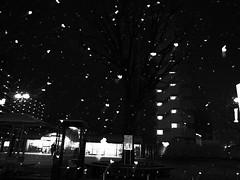 snowy day (B/W)