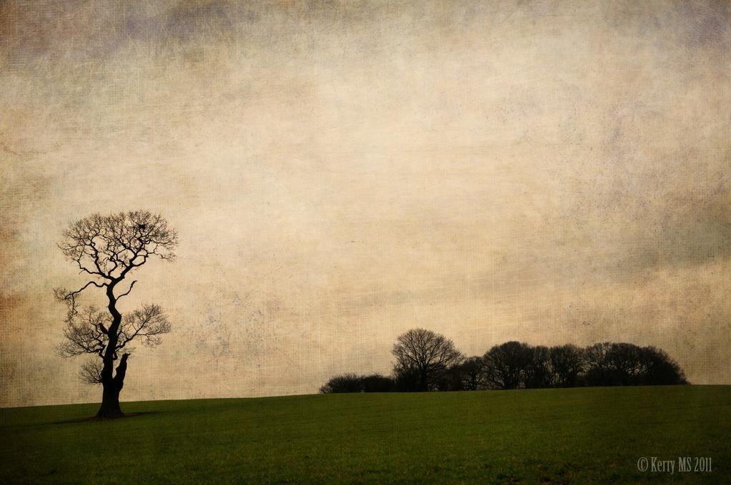 Ria's tree