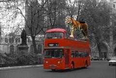 Wildcat london Transport