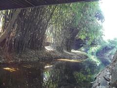 100_0164 (travellersai) Tags: kerala treehouse wayanad teaestate wildboar bandipur chital vythri banasuradam soojiparafalls streamvalleyresorts
