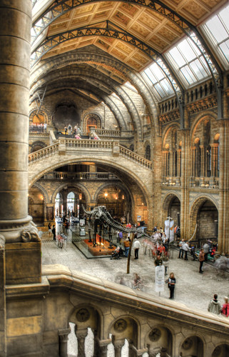 Natural history museum. London. Museo de historia natural. Londres