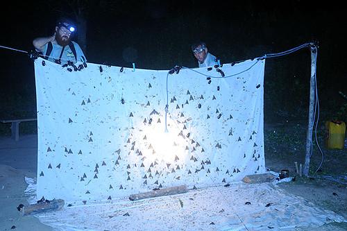 Expédition Sangha 2010 : piège à insectes de nuit