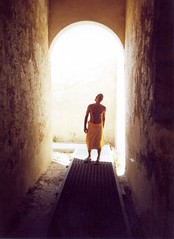 San Domino estate 2001