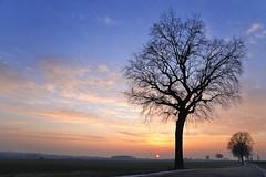 soir d'hiver sur la chausse romaine (pierre hanquin) Tags: light sunset color tree nature geotagged nikon europa europe belgium belgique pierre arbre wallonie d90 hannut mygearandme mygearandmepremium mygearandmebronze mygearandmesilver mygearandmegold mygearandmeplatinum hanquin