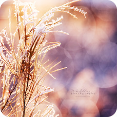 Crystal Halos (Mike Golding) Tags: winter light sunlight nature grass frozen frost natural crystal bokeh circles naturallight halos