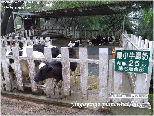 苗栗竹南_四方牧場20110220_R0017957