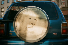 (Gebhart de Koekkoek) Tags: vienna wild portrait car animal wheel 35mm austria lion t5 yashica