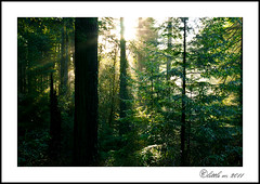 the Redwoods (little m:)) Tags: california trees lighthouse pacificocean nationalparks pbs johnmuir crescentcity raysoflight theforest coastalredwoods redwoodsnationalforest americasbestidea kenburnsseries