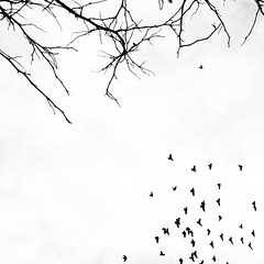 seattle sky blackandwhite bw white tree bird fly branch... (Photo: Star Rush on Flickr)