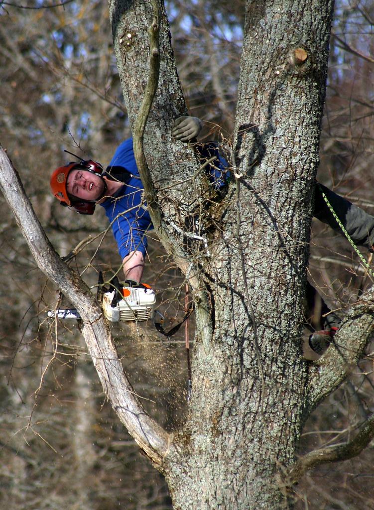 Arborist at Work