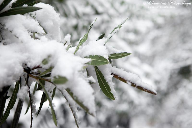 Voroncov_palace__winter_04