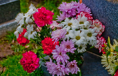 Grave Flowers Mixed (futureal33) Tags: flowers flower macro grave graveyard rose tomb crocus daffodil gravestone bouquet crematory chrysanthemum snowdrop chrysanthemums plasticflower fakeflower crocusflower chrysanthemumflower snowdropflower canon60mm28 graveflowersmixedbouquet