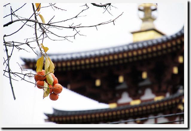 20101117_085925_薬師寺