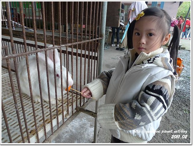 宜農牧羊場 (10)