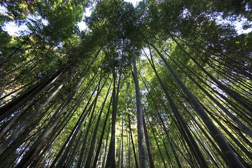 フリー写真素材, 自然・風景, 森林, 竹・竹林・竹藪, グリーン, 日本,
