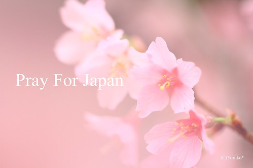 Sakura Dream  Pray For Japan
