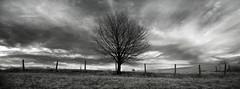 When the wind blows (part III) (elkarrde) Tags: sky bw tree nature clouds landscape ir blackwhite noiretblanc pentax dramatic highcontrast infrared 1855 twop da1855 justpentax pentaxk100dsuper smcpentaxda1855mmf3556 k100ds ir720 pentaxart tianyair720nmfilter