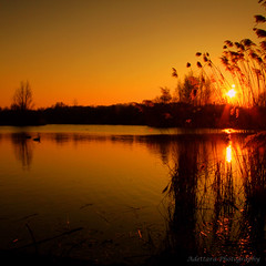 ~The End Of Today Is The Beginning Of Tomorrow~ (Adettara Photography) Tags: trees sunset lake water grass reflections germany landscape lights golden duck silent walk silhouettes down tribute prayforjapan canonef1022mm canoneos7d adettara doublyniceshot artistoftheyearlevel4
