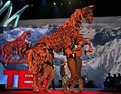 War Horseplay