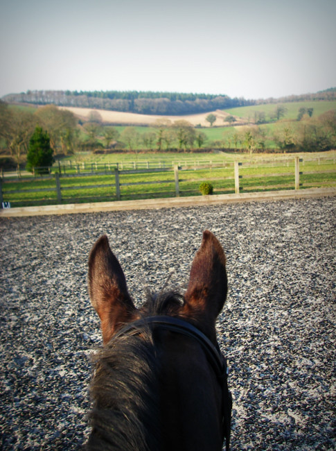 Day 285 - View from a dressage lesson