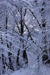 SONY DSC (Stella-Joana) Tags: winter blackandwhite mountain snow tree nature sony bulgaria pascal 2011 pirdop fantasticnature flickrunitedaward