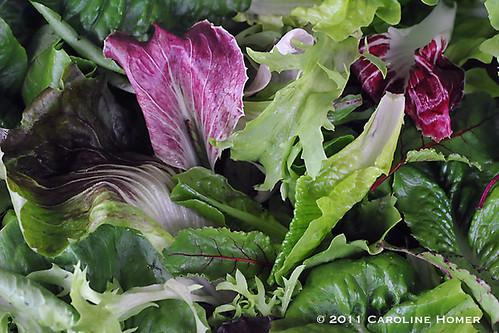Garden fresh salad greens