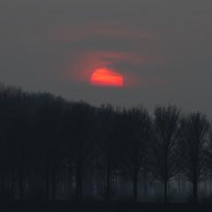 Sunset (Gerwin Filius) Tags: trees sunset sun tree zonsondergang bomen zeeland bos zon donker nisse walcheren canon70200mm canonef70200mmf4lisusm canon7d