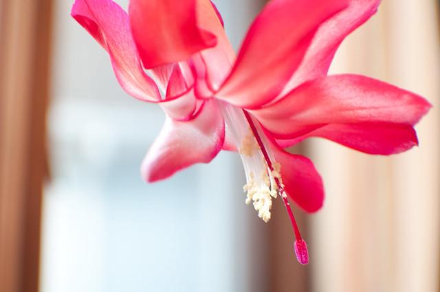 SOOC - Flower