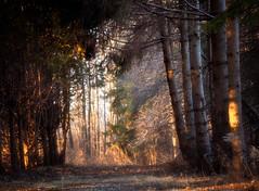 Spring's Arrival (Vir Raras) Tags: naturepoetry