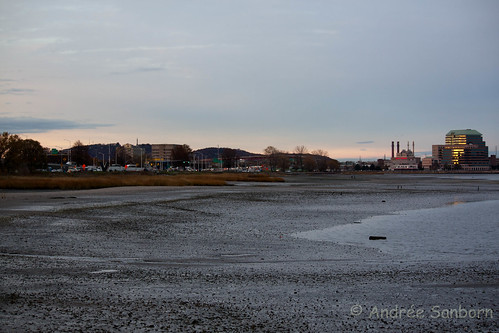 Mudflats in New Haven Harbor-1.jpg