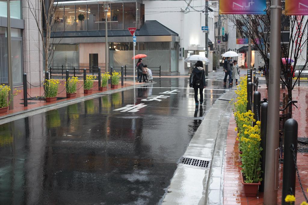 Rapeseed one rainy day In Osaka
