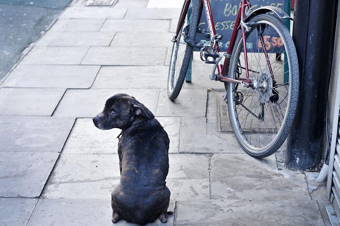 Stroud Green doggie