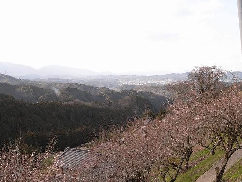 金剛葛城山系も見渡す梅の名所『広橋梅林』@下市町