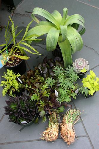 plant haul