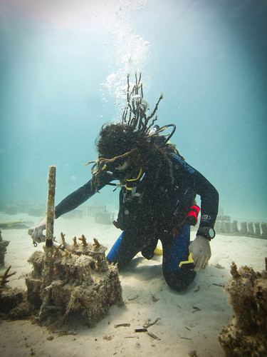 Removing the algae from the coral bases