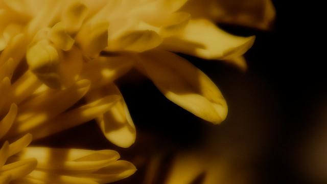 94/365: Petals
