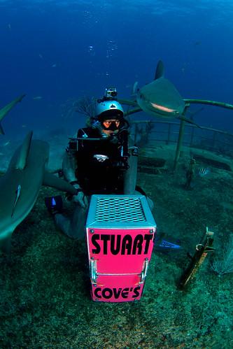 Joi with shark feeding box