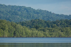 20160130-5C4A0794 (Take-it-easy59) Tags: 2016 30012016 corcovado corcovadoparquenacional costarica npcorcovado nature naturephotography tropicalrainforest tropischregenwoud winter