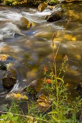 McGee Creek Pack Station-6 (sourdoughspud) Tags: 2016fallcolors bigsur california inyocounty mcgee ocean packstation pointlobos stream blurredwater eastside orangeflower sierra