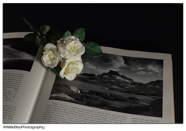 3 Roses and a book.