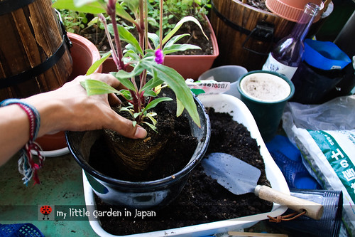How-to-plant-in-a-container-2