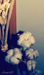 Soft Cotton [26/365] (MiriamGM) Tags: madrid espaa girl vintage 50mm spain nikon soft flickr chica teenagers days cotton 365 proyect effect dias suave alcobendas proyecto 2011 d40 algodn 365days af5018d 365dias xakatafoto miriamgm