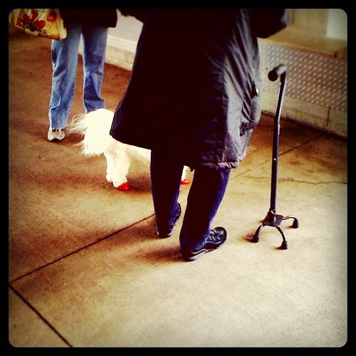Dog at costco wearing red shoes. #WTF