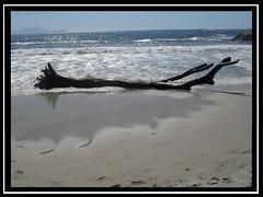 rvore nufraga (Ronaldo Miranda, compositor) Tags: sea tree beach brasil riodejaneiro mar sand areia rvore atlanticocean arpoador 2011 praiadodiabo nufraga